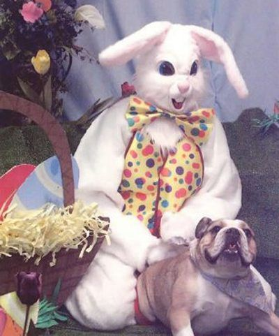 Image result for easter bunny fail