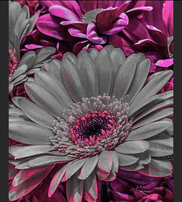 Today's #FlowerPhotography ©️H.Mc.Art-Foto  #amazing_shots #amazingworld #amazingnature #colourful    #texture #myphoto #colourphoto #photography #colorphotography #ArtistOnTwitter #artistsontwitter #artistsoninstagram #art #photographer #photooftheday #picture