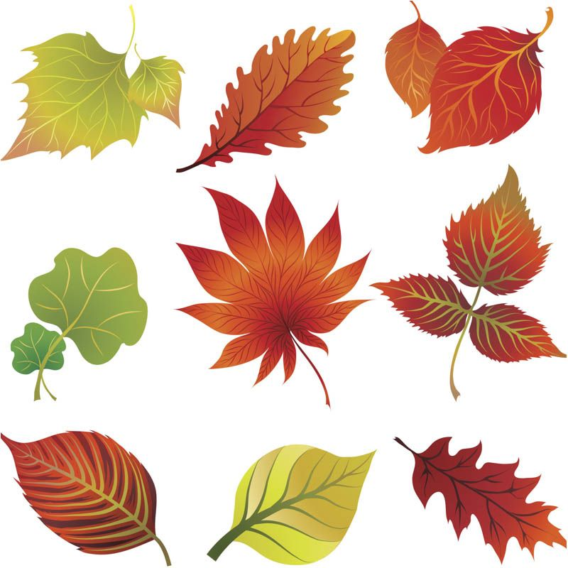 Fall leaves autumn. Clip art vector printables