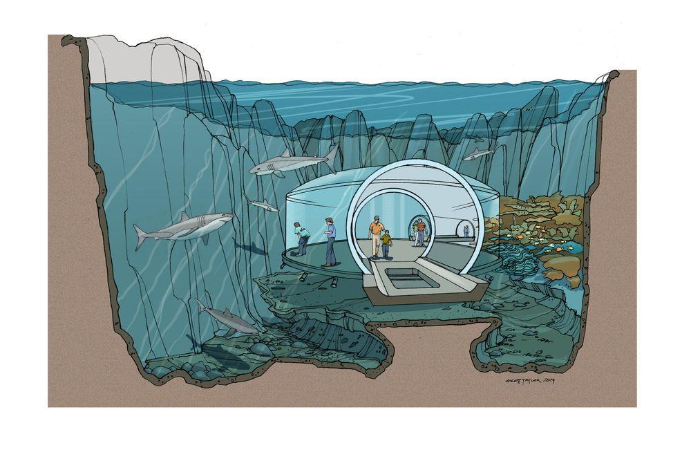 Shark tank final cross section pinterest for Koi pond builders orlando fl