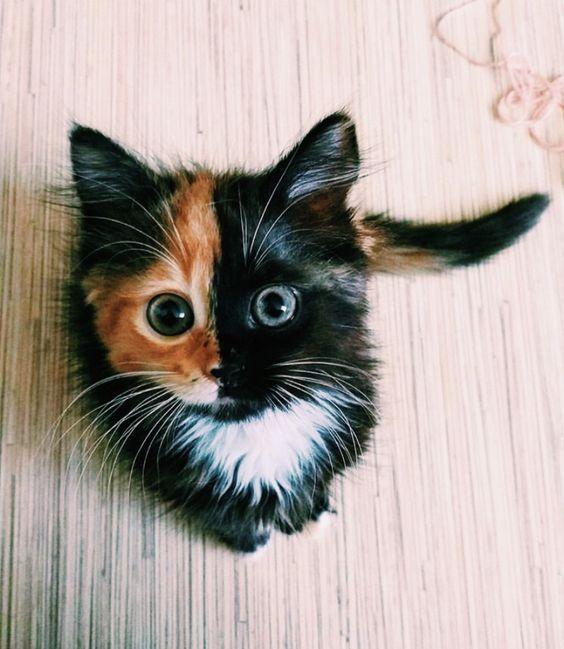 wow! 😸 Minipet Online Pet Boutique is a Melbourne