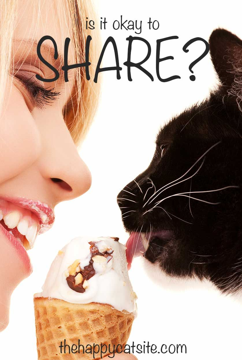 Can Cats Eat Ice Cream? A Guide by Cat site, Cat fleas