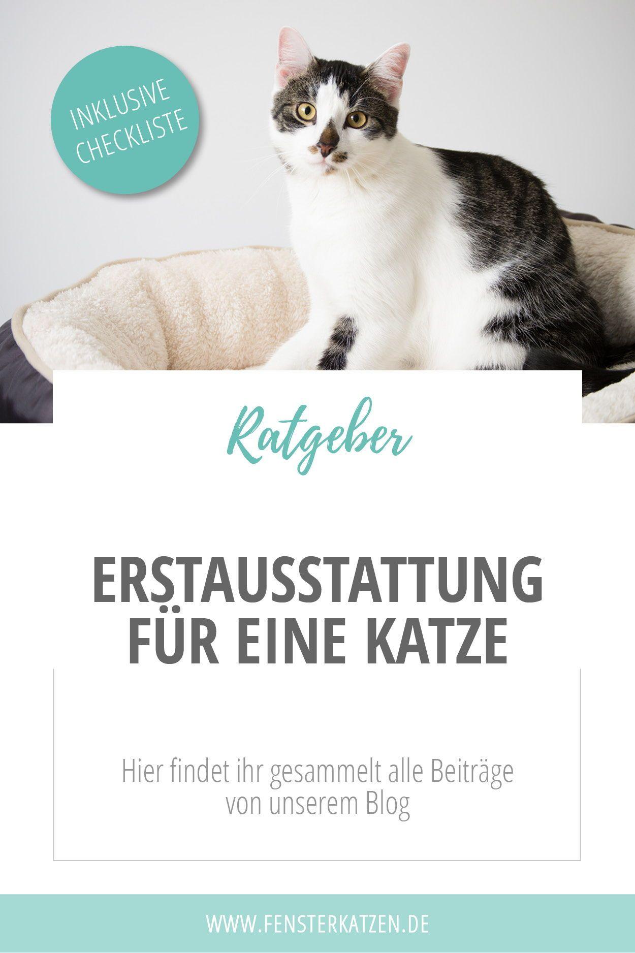 Erstausstattung Katze Katzen Mehrere Katzen Und Katzenhaltung