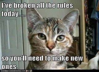 Pin By Rosalie Racine On Words To Remember Funny Cat Pictures Bad Cats Crazy Cats
