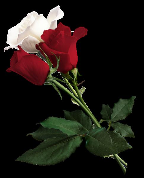 Imagenes De Rosas De Colores Jardin De Rosas Rojas Flores Bonitas Rosas
