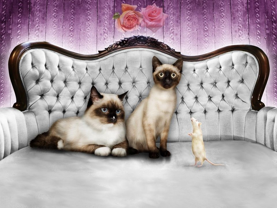cats and mouse Cat love, Free cats, Cats