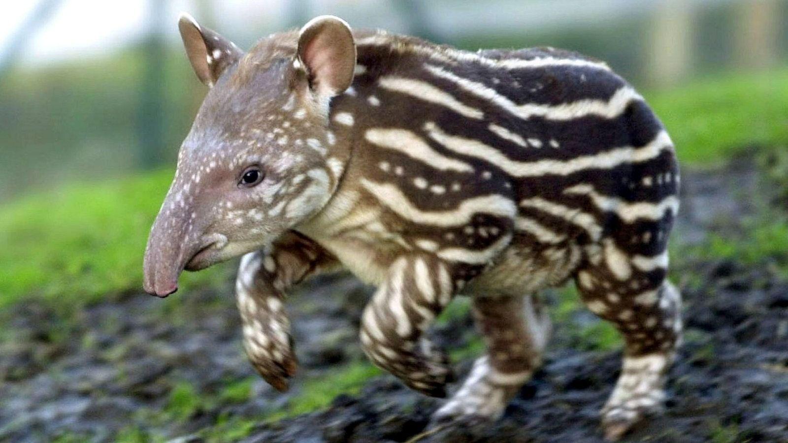exotische fauna in den tropischen wälderntiere  exotische
