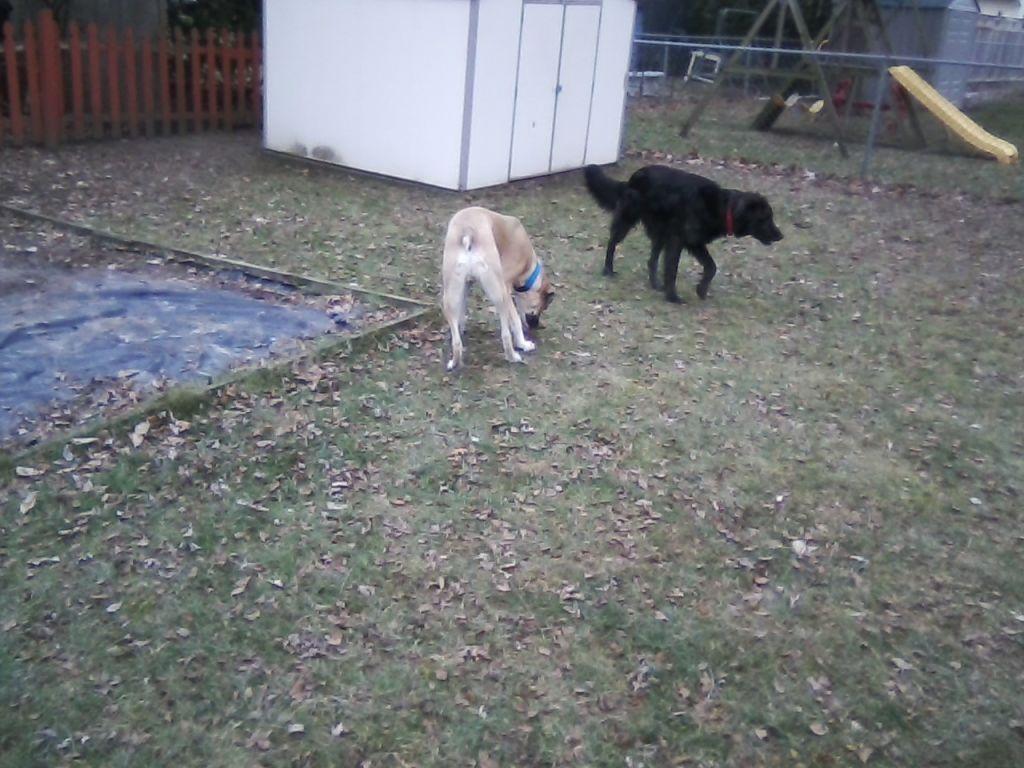 Chewy bingo dec 31st 2016 jan 2nd 2017 stay dog