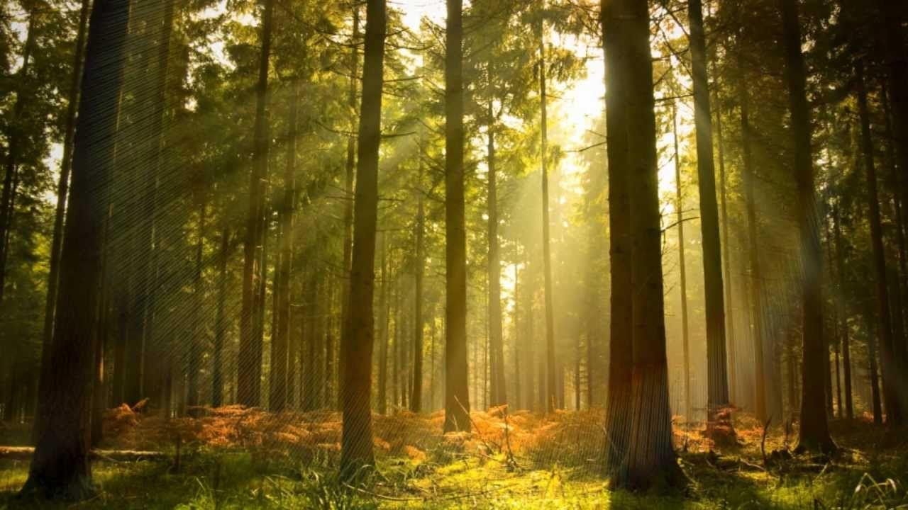 Background Music Instrumental Piano Nature Relax Daily N 005 Survie En Milieu Sauvage Grands Espaces Et Survie