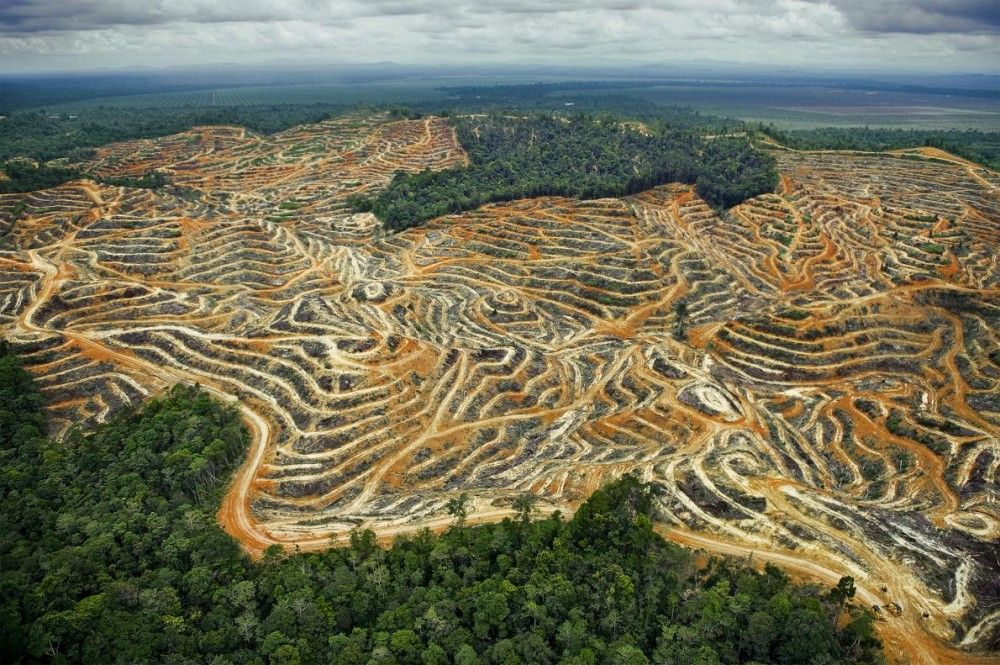 As Rain Forests Go So Goes Humanity Industry Tap Palm Oil