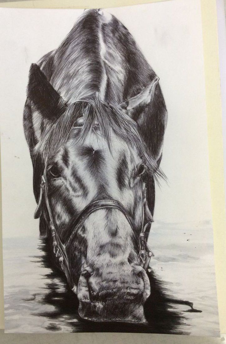 Water Horse Horses Horse Drawings Horse Illustration