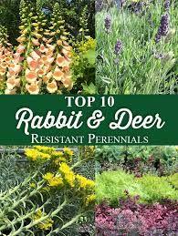 How To - Animals - Deer and Rabbit Resistant Plants #shadeplantsperennial