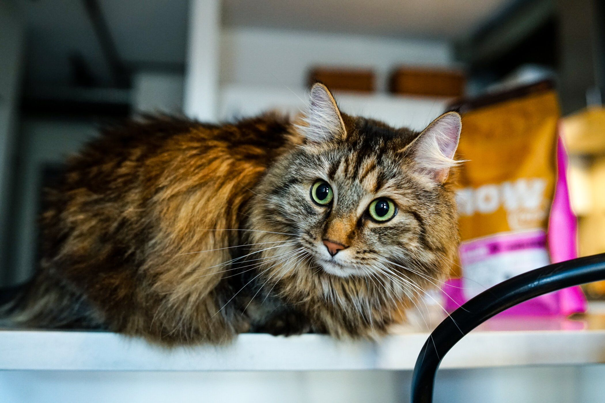 Planning to Adopt a Cat? Five Tips to Help you