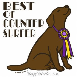 Chocolate Labrador Best Of Counter Surfer