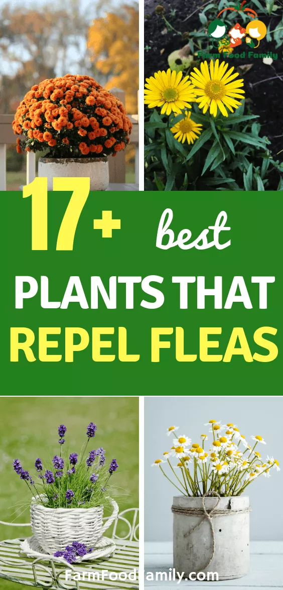 How To Get Rid Of Fleas In House Plants