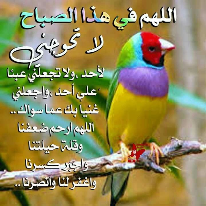 Pin By Soad Salem On اقوال وادعيه Parrot Animals