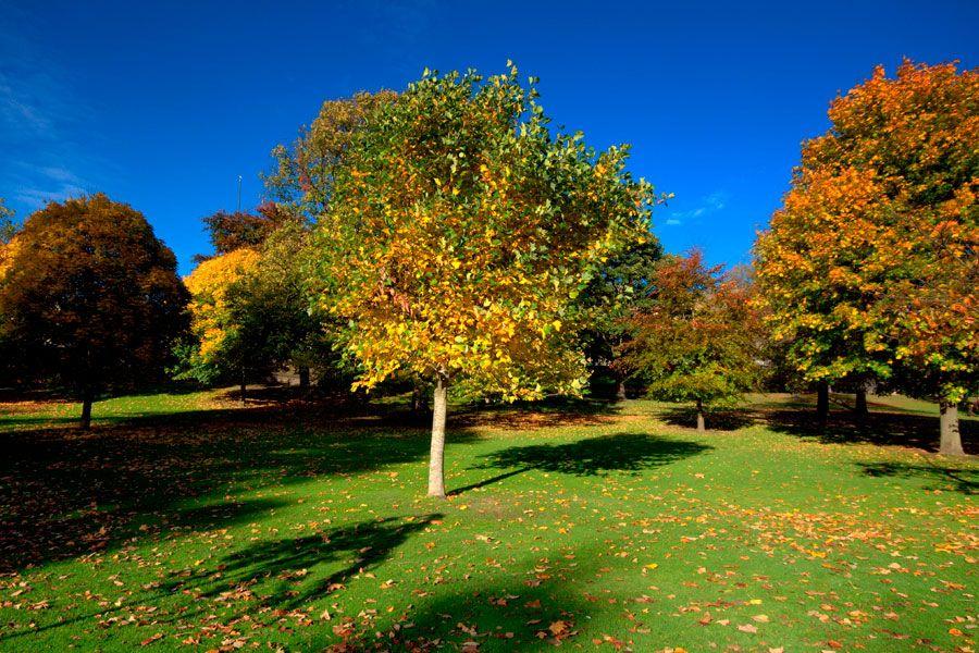 Si est s en la etapa de dise o de tu patio y necesitas elegir los rboles para el jard n aqu - Arboles jardin ...