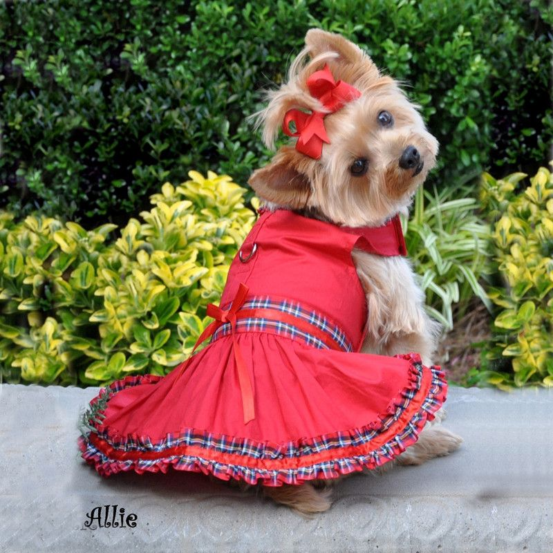 Yorkies Dressed Up Pictures Tartan Plaid Small Breed Dog Clothes