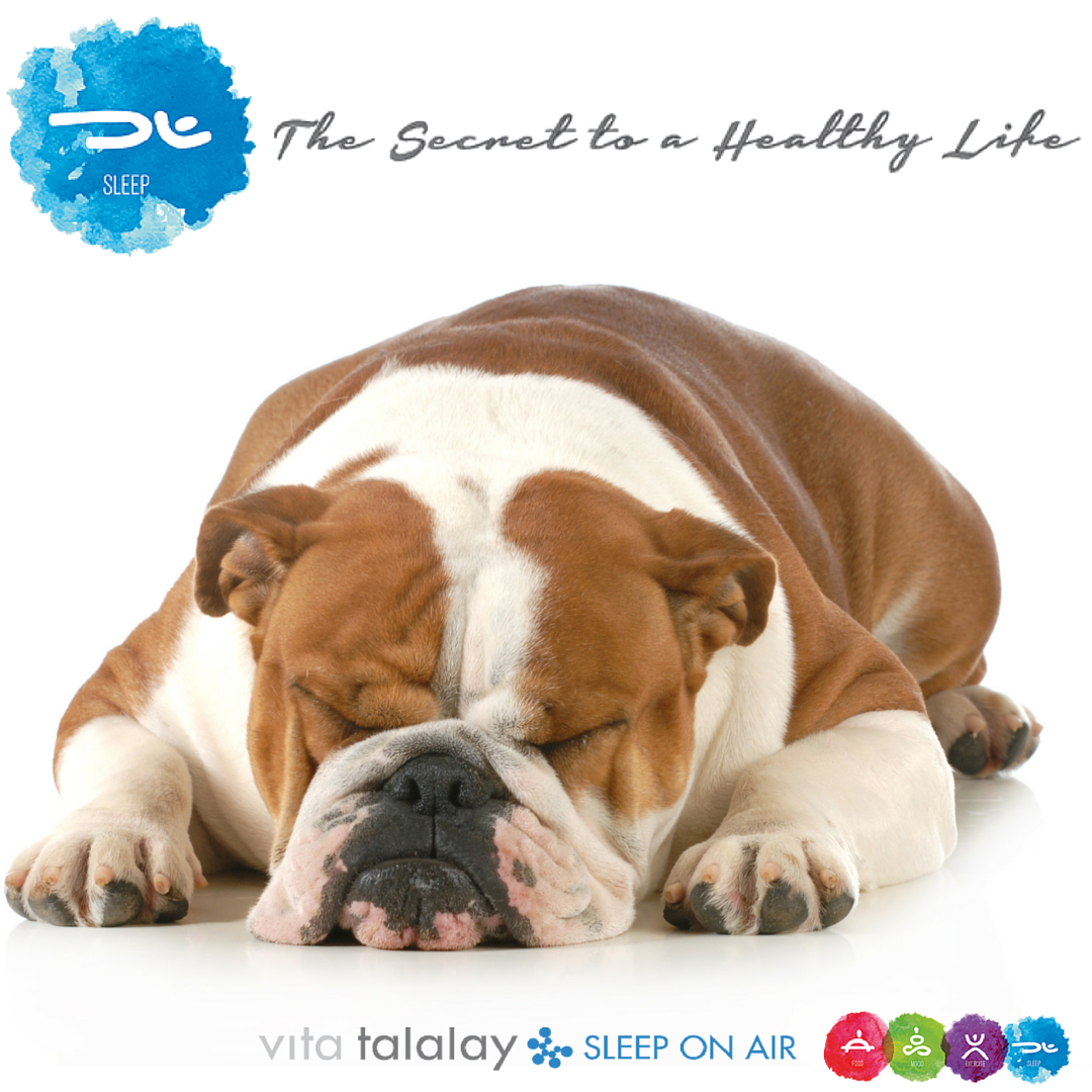 English bulldogs are the only canines known to suffer from sleep ...
