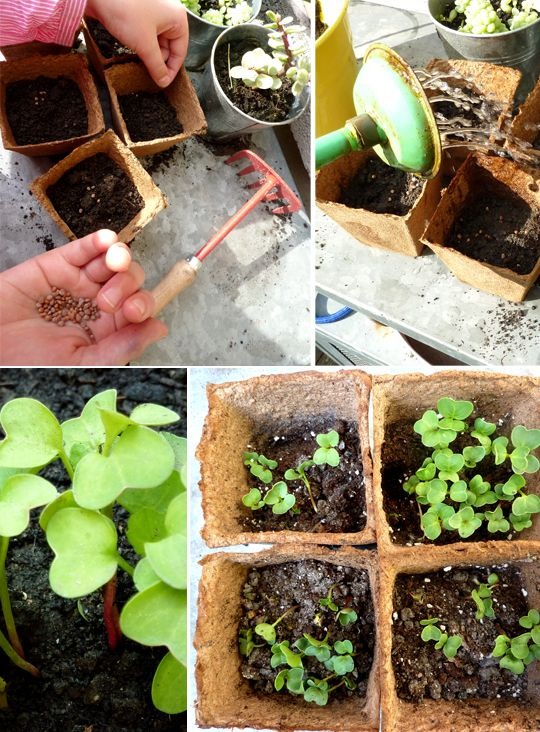 jardinage enfant radis   Jardinage, Jardinage enfants ...