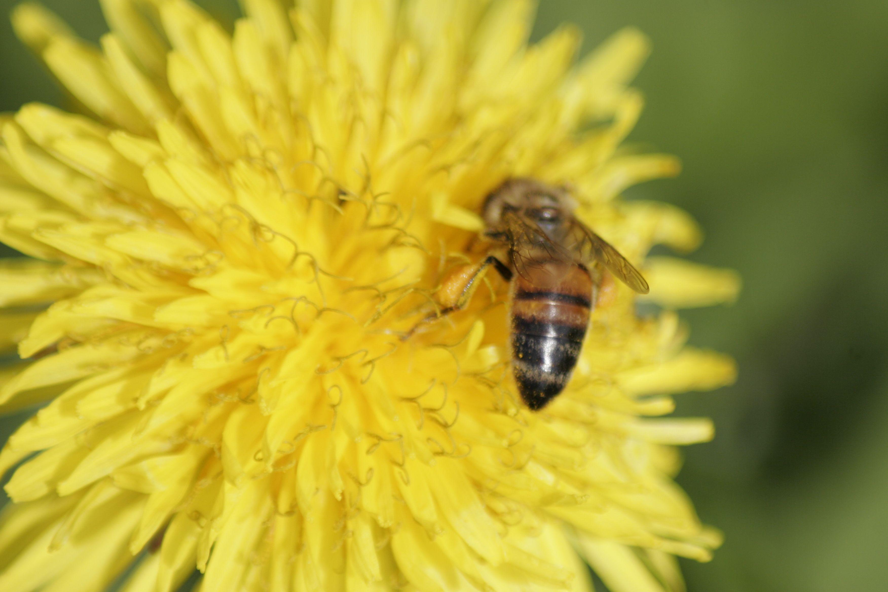 #flowers #bee