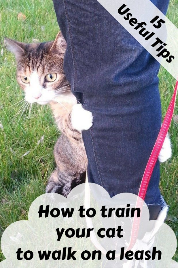 How To Train Your Cat To Walk On A Leash Cat leash, Cat