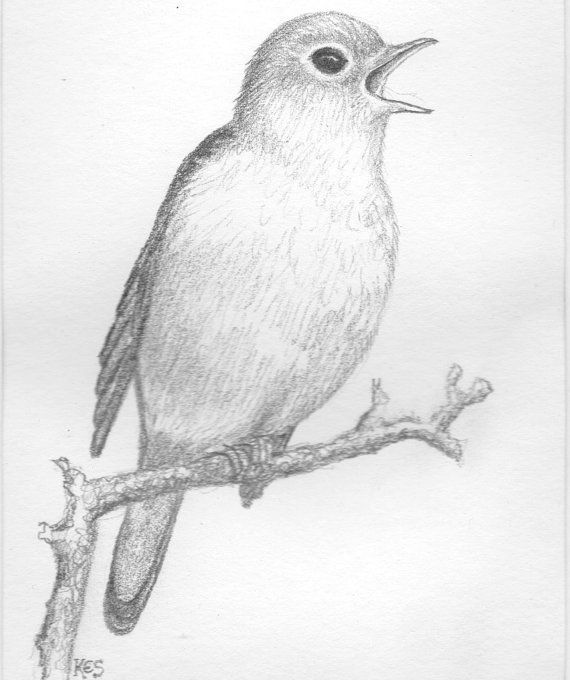 Pencil drawing of nightingale bird original art pencil sketch on paper supplied with mount ready to be framed for use as wall decor