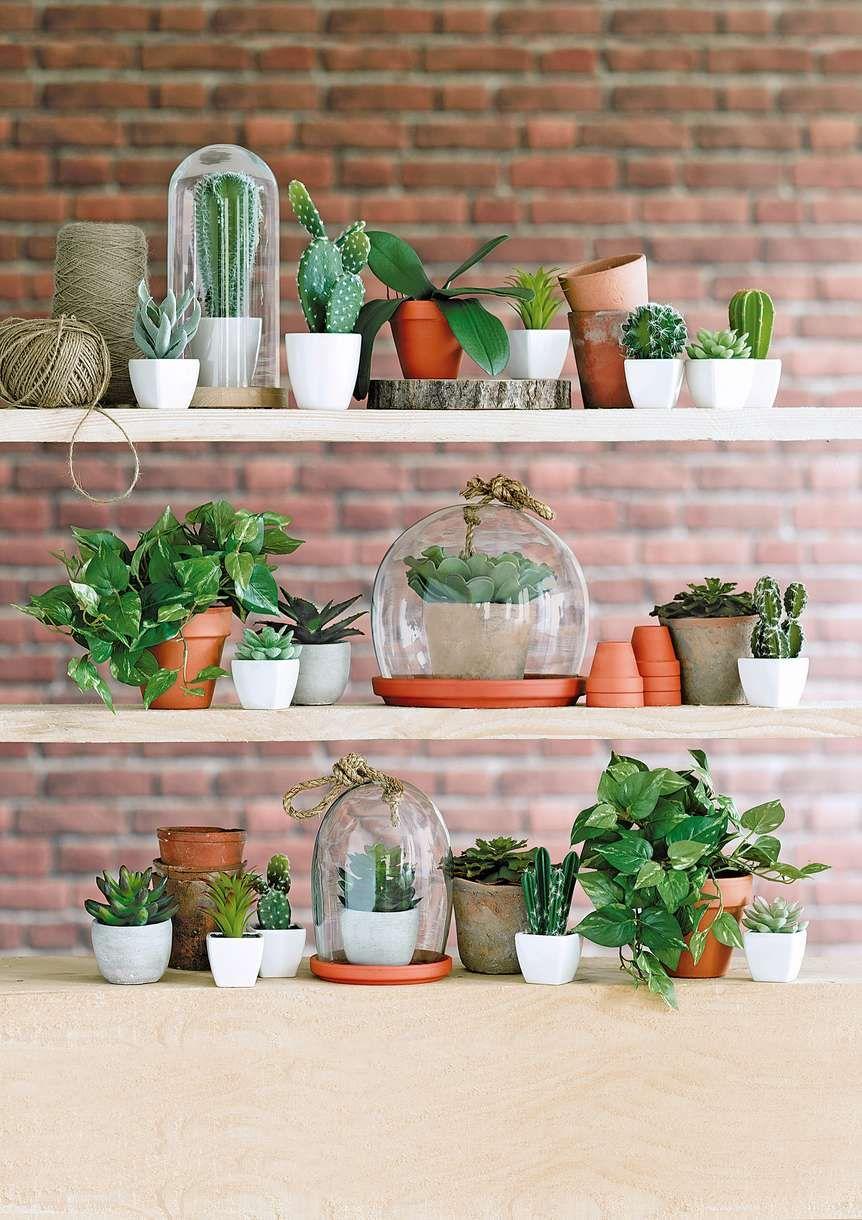 prendre soin de ses plantes d 39 int rieur sombre les plantes et plantes. Black Bedroom Furniture Sets. Home Design Ideas