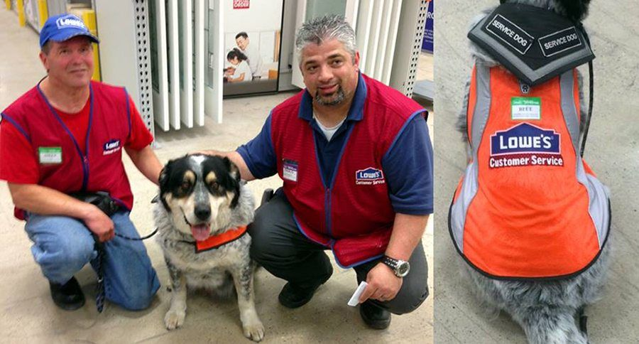 Lowe's Service Dog Gets Employee Vest, Too Service dogs