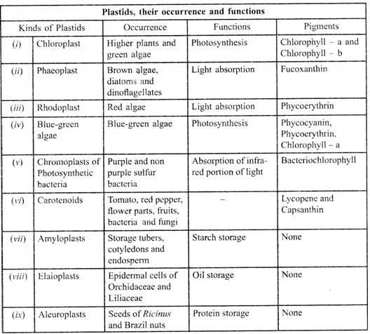 Parts Of A Plant Definitions Beautiful Structure Of Plant ...