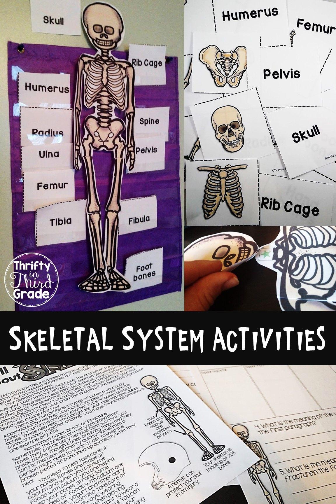 Skeletal System Activities