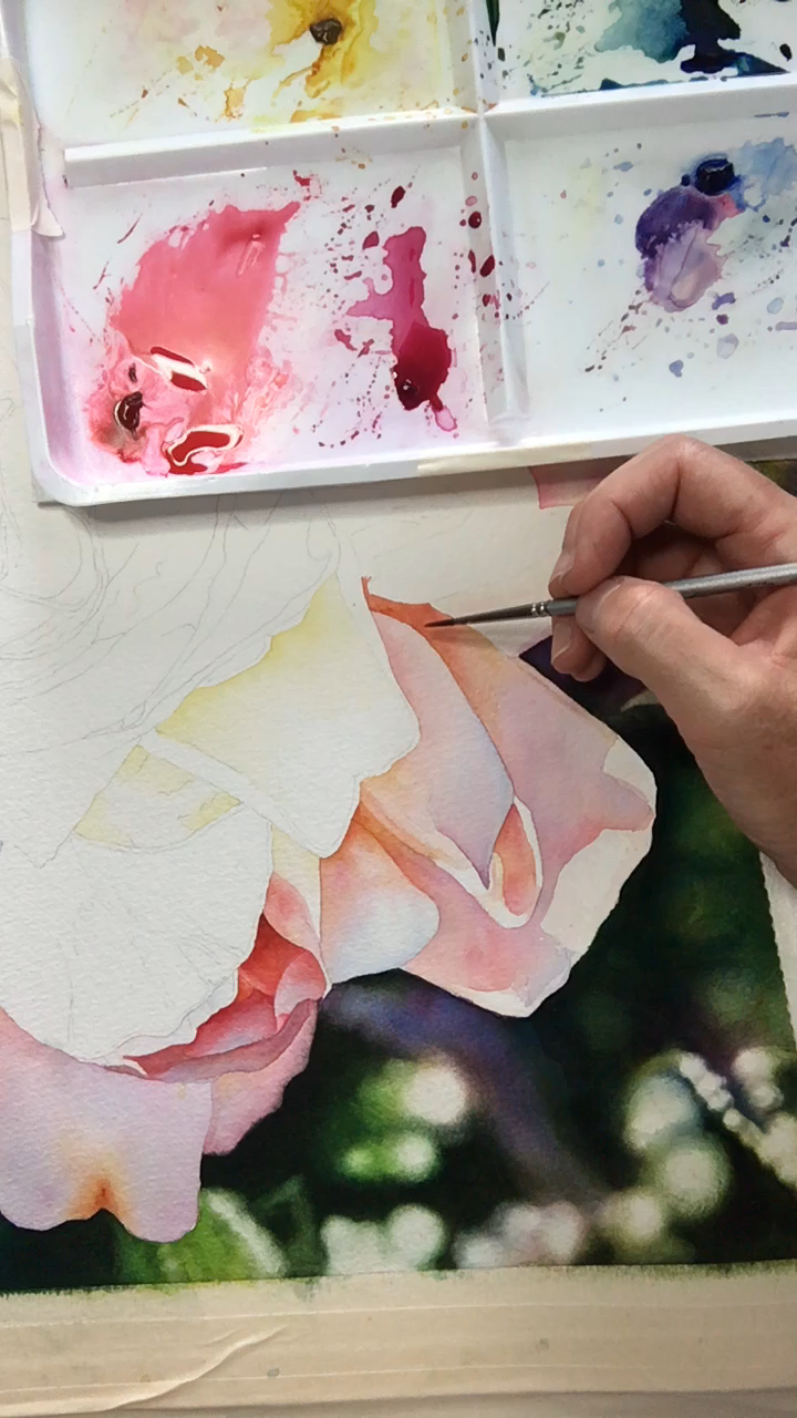 Working on my newest painting of a Rose. More to come.