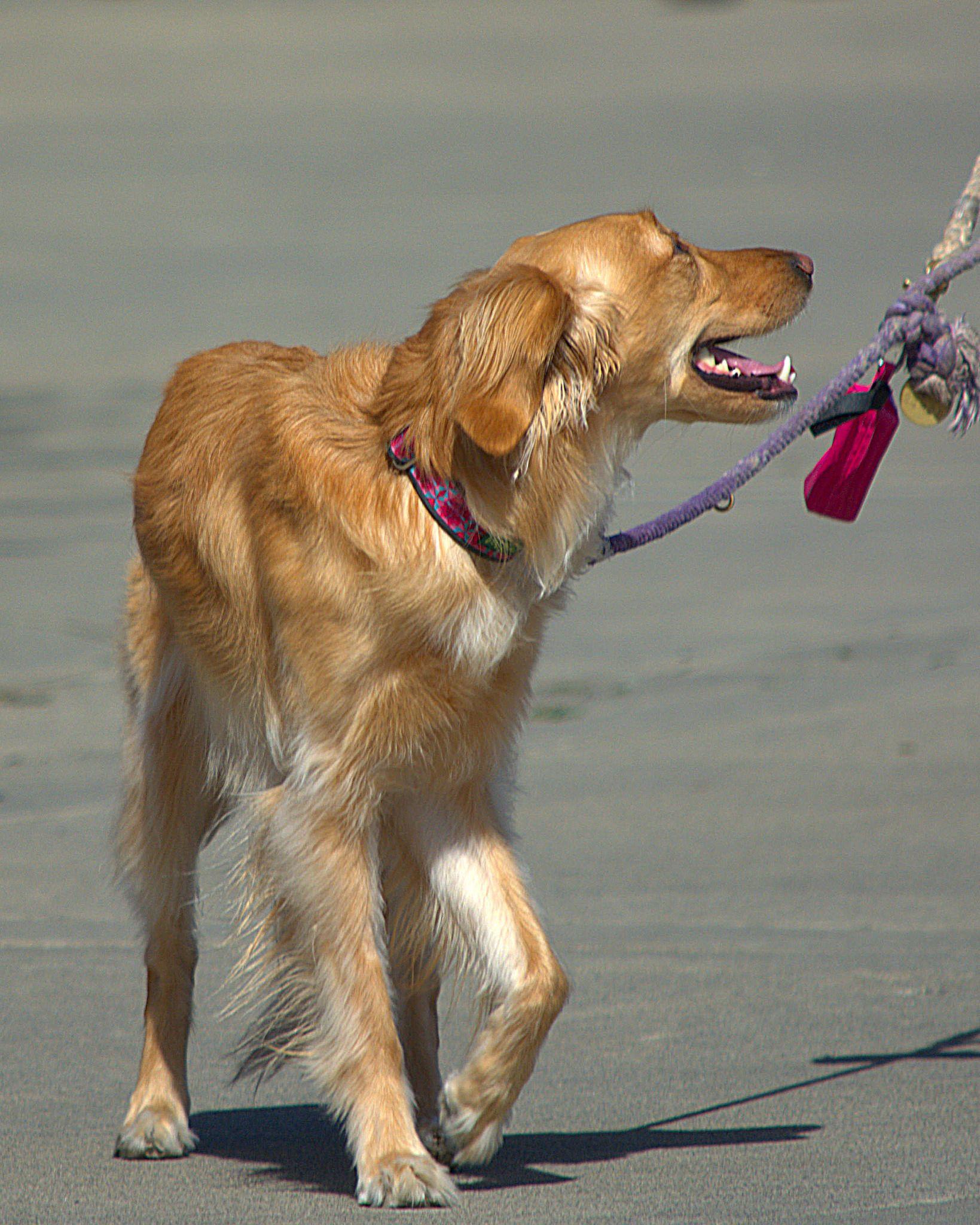 https://flic.kr/p/S9n2bi | Sweet Doggie | A beautiful animal . . .