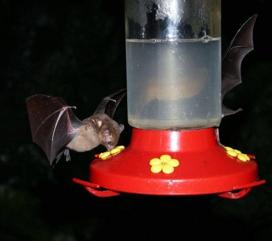 Pin on Bats in the belfry!