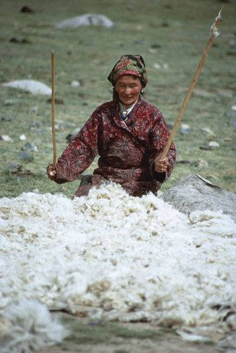 A Mongolian nomadic herder makes felt by using two thin sticks to fluff a pile of wool before wetting it. It will then be rolled in a skin and dragged behind a horse to compact the fibers.  Location:ALTAY MOUNTAINS, MONGOLIAN PEOPLE'S REPUBLIC.