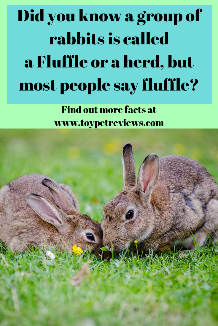 35 Interesting And Cool Facts About Rabbits Animals Care