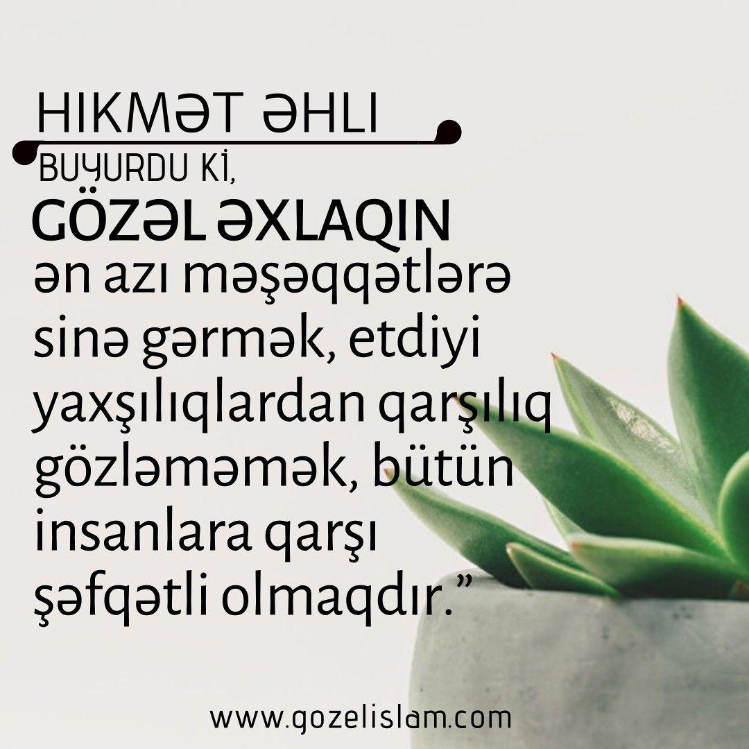 Hikmət əhli Buyurdu Ki Plants