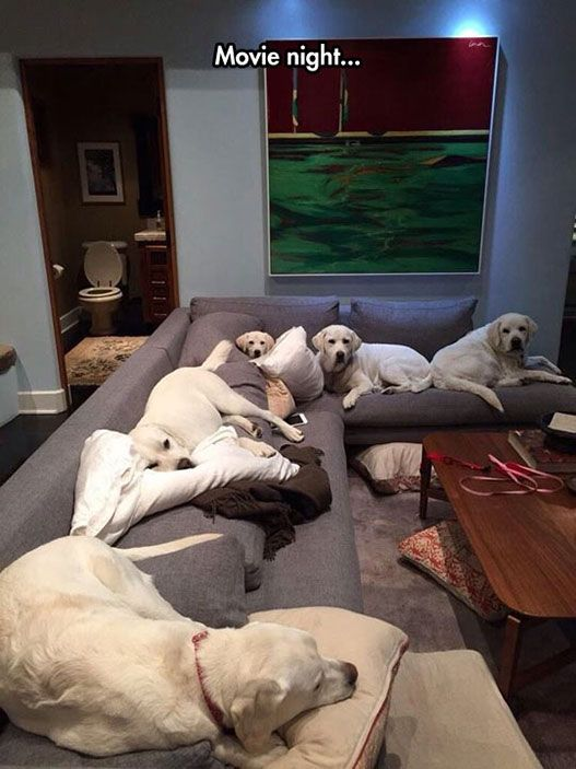 Sorry, couch is full...