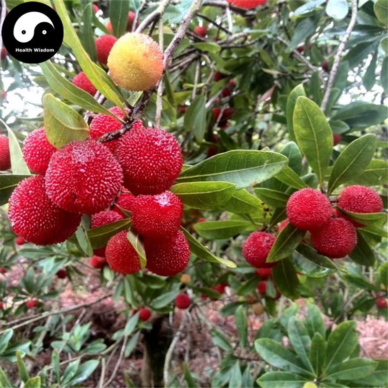 Buy Strawberry Fruit Tree Seeds 200pcs Plant Berry Myrica For Chinese Yang Mei Quạ
