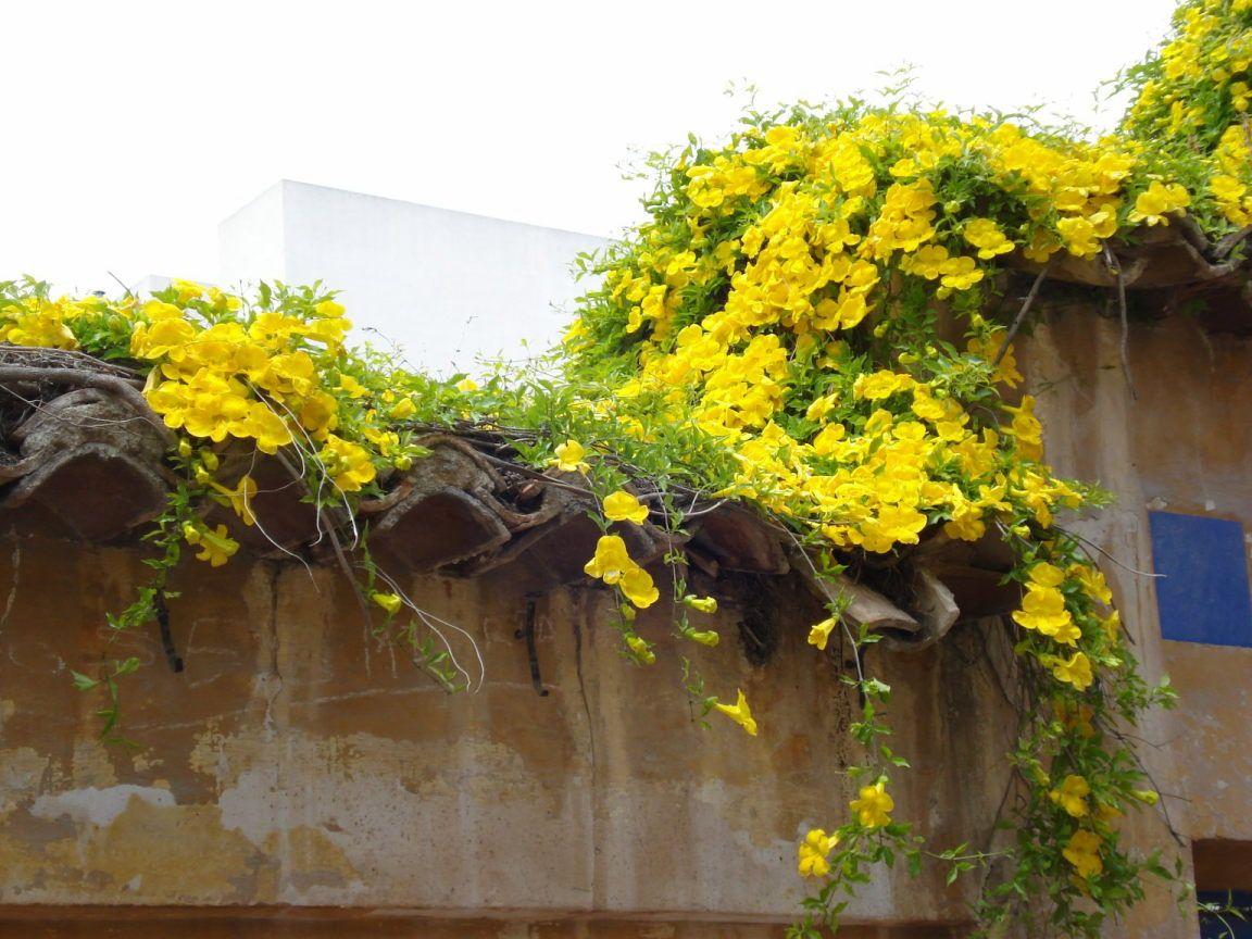 Pin En Gardening Jardinería