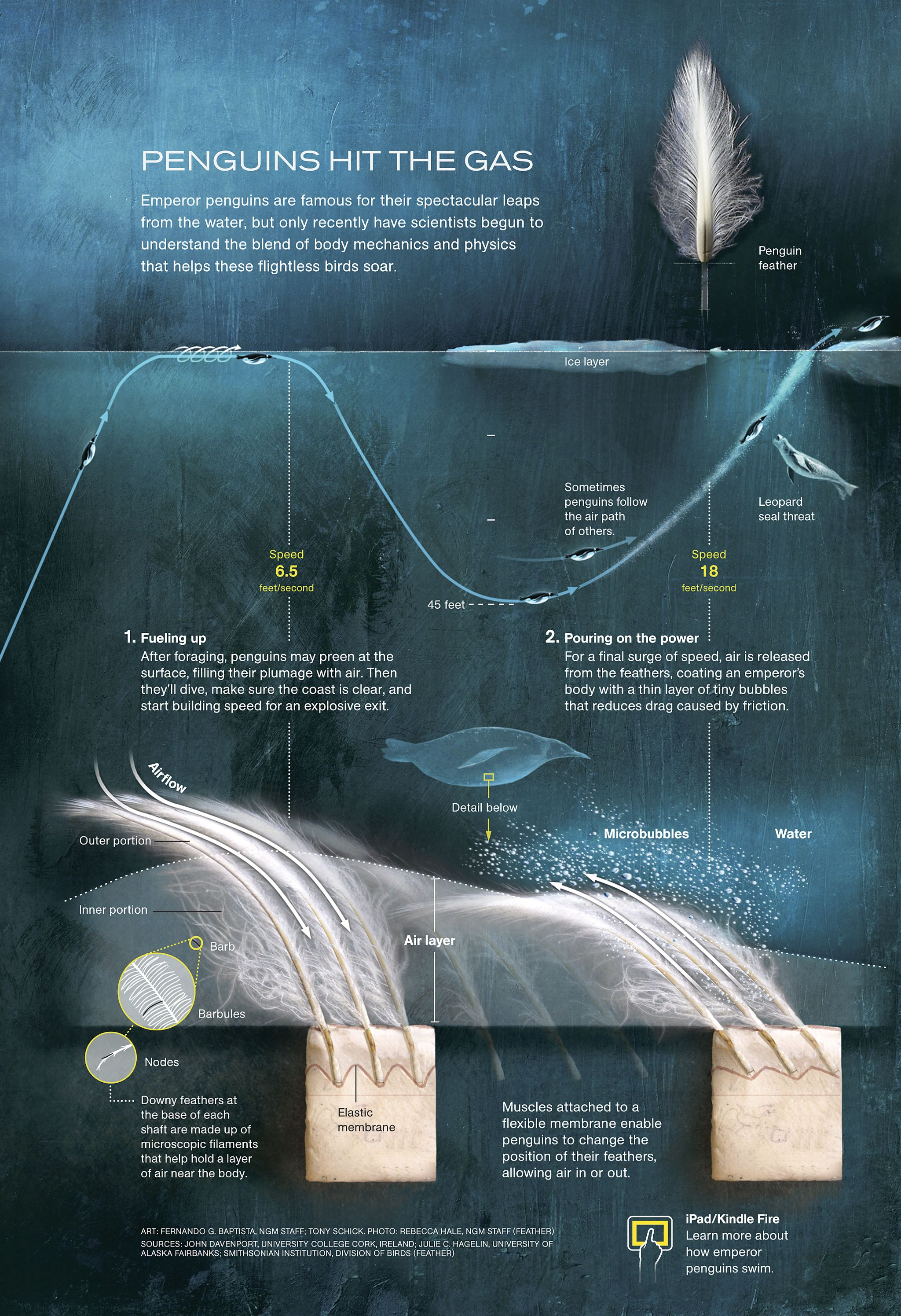 National geographic infographic - Google Search | Infographics ...