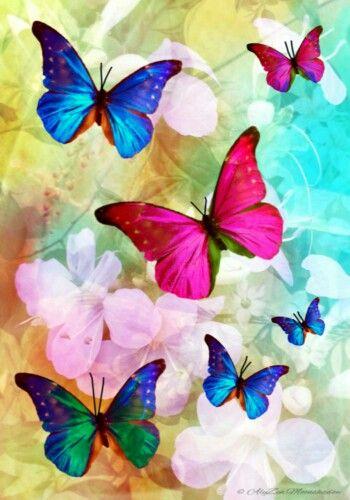 Pink And Blue Butterflies Thesecretgarden  -9306