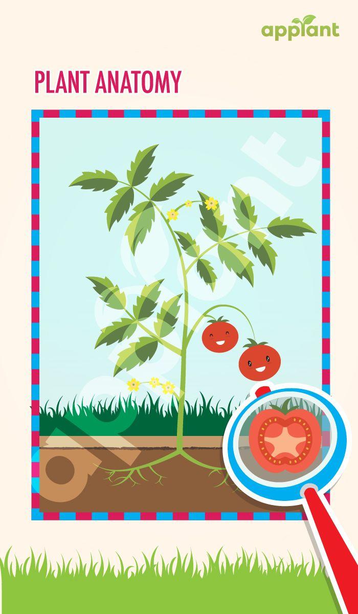 Plant Anatomy Anatomy Of Plants How Plants Grow What Are Plants