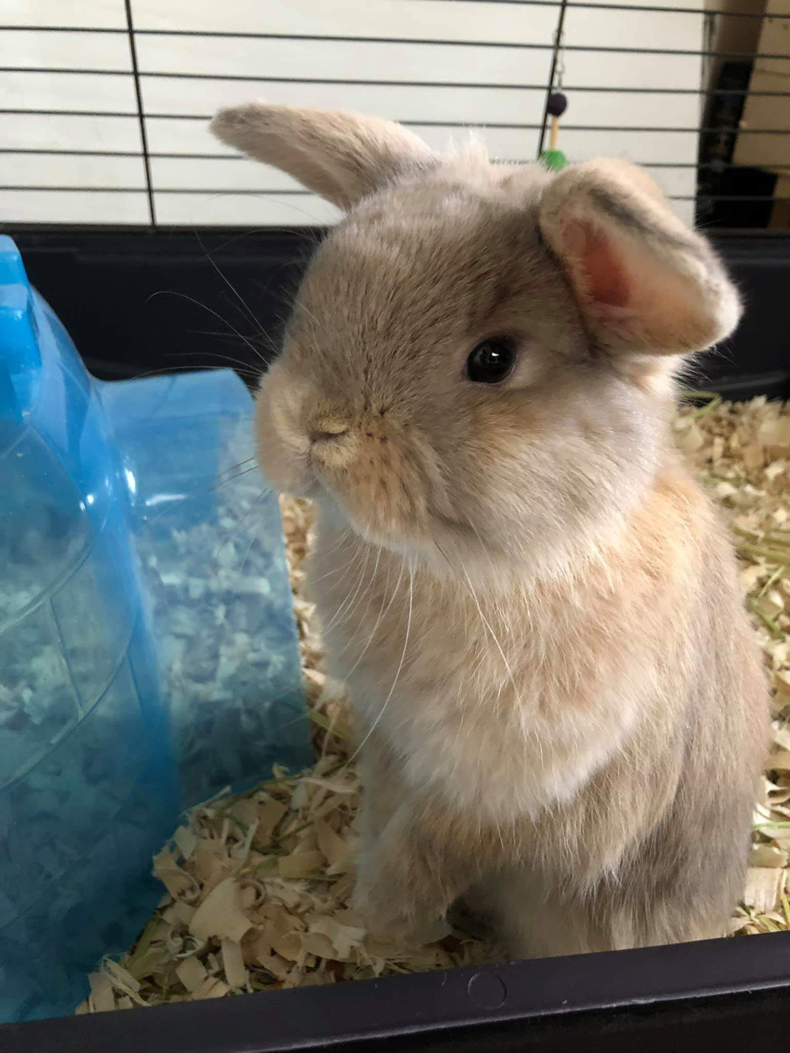 100 Top Voted Ideas for Pet Rabbits.. Our 4 month old