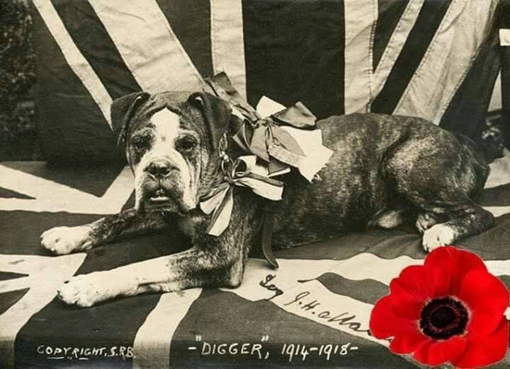 As the world war i gas alarms rang out digger the brown