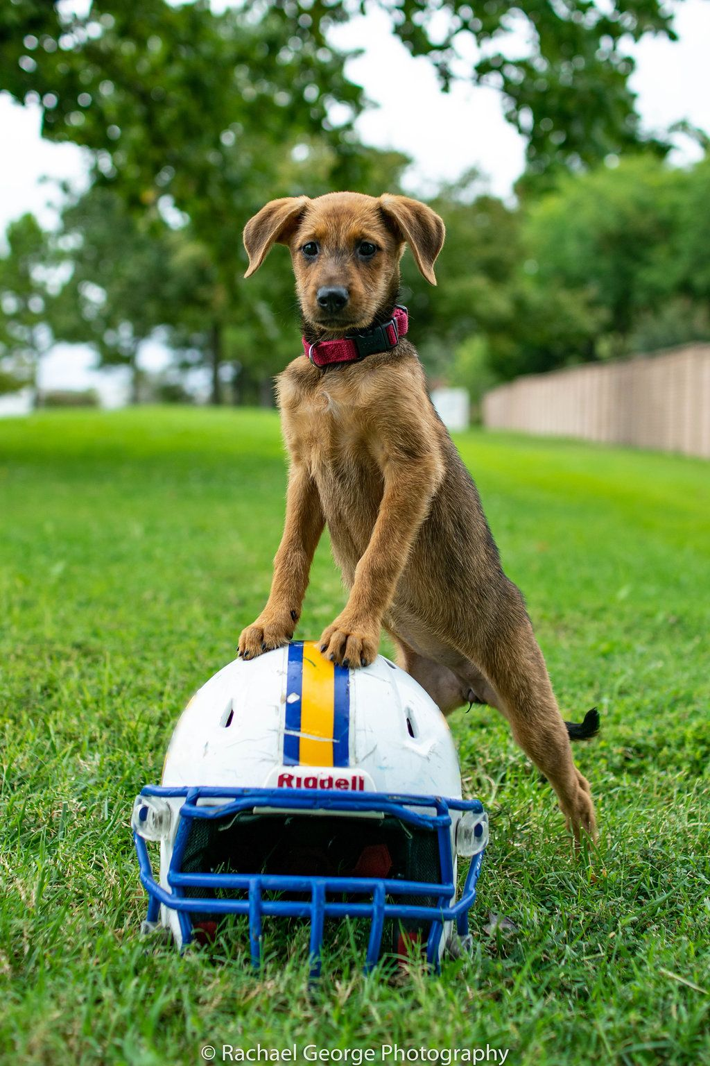 Kanga Is A Female Wolf Hound Mix She Is A Beautiful Girl Around 5 Months Old She Is House Trained And Loves To Sleep In T Medium Sized Dogs Doggy Smart Girls