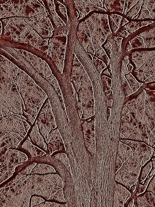 The textural effects of embossing with digital painting are always intriguing. This one takes on a warm feeling. Embossed Tree 2     by S Loft