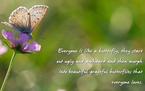 butterfly_quotes4