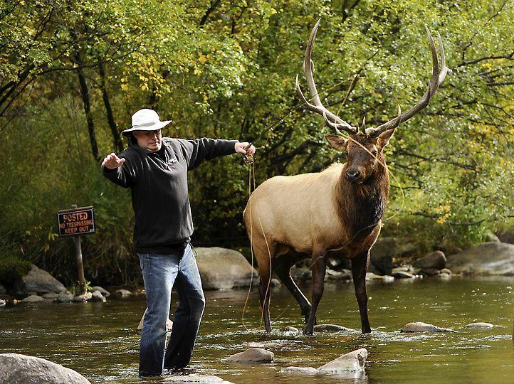Photos Colorado Day In Pictures Horse Camp Camping Areas Near Me Estes Park