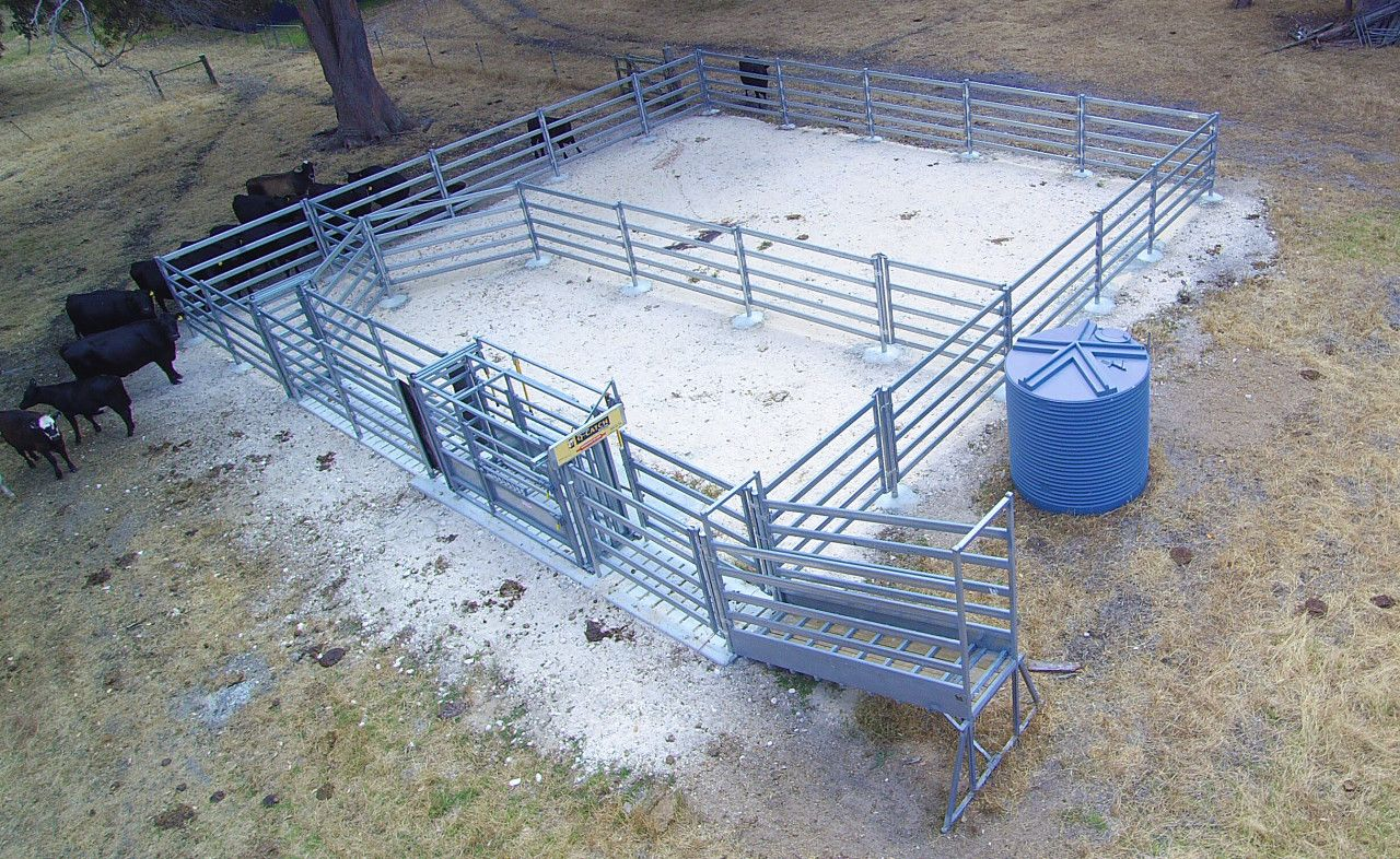 Permanent cattle yards with 100 head holding capacity ~ Heavy duty ...